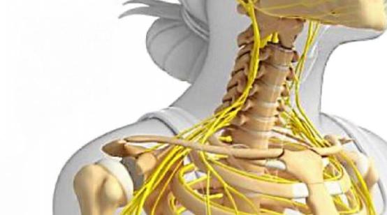 Mikroskładniki są potrzebne do zdrowego układu kostnego