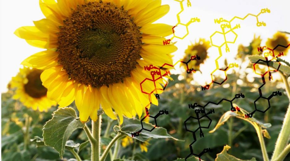 Stosowanie ochrony przeciwsłonecznej powoduje niedobór witaminy D