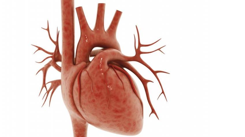 Mikroskładniki odżywcze wspomagają funkcję mięśnia sercowego