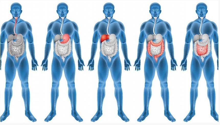 Korzyści płynące z synergii mikroelementów dla układu pokarmowego