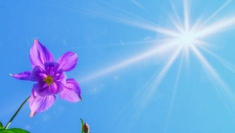 Optymalny poziom witaminy D może chronić przed nowotworem