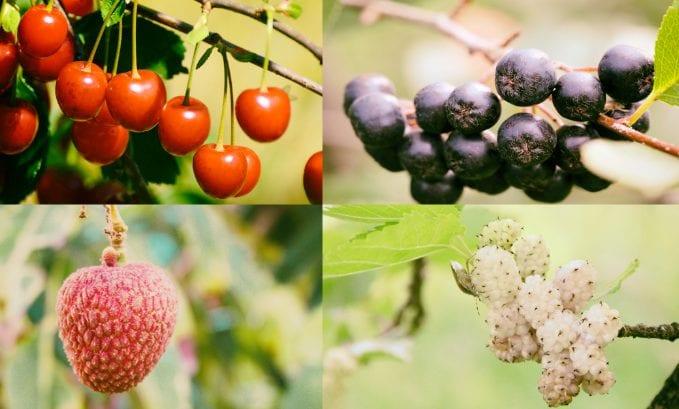 Ważne mikroskładniki odżywcze dla Twojego układu odpornościowego